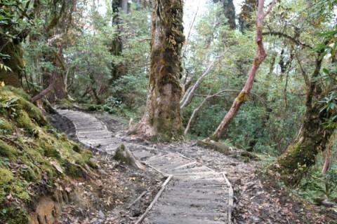 Сикким. Тропа в дождевом лесу