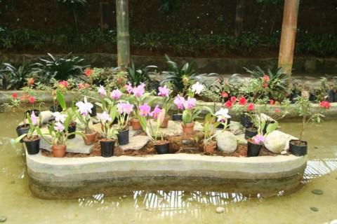 Сиккимские орхидеи