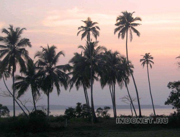 Арамболь, Гоа. Пальмы у моря на закате.