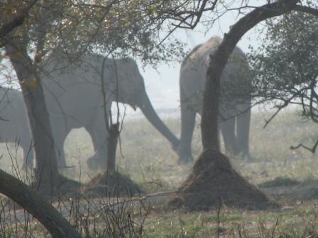 Сновидческие слоны (большая семья, около десяти)