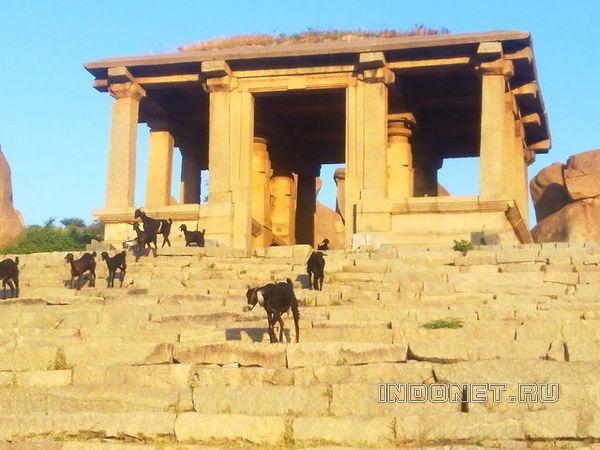 Хампи. Козы на ступенях храма