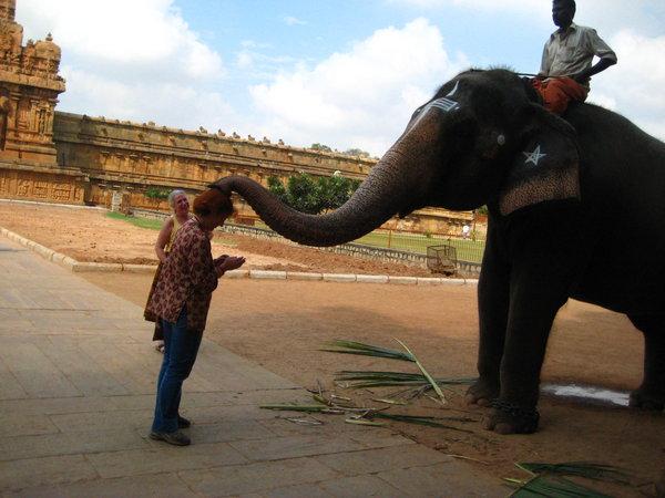 Индийский слон. Благословение