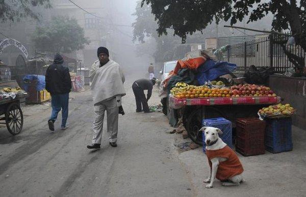 Холодная зима в Дели, фото http://www.thehindu.com