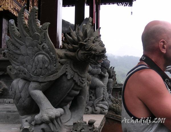 Любопытный Балийский Дракон