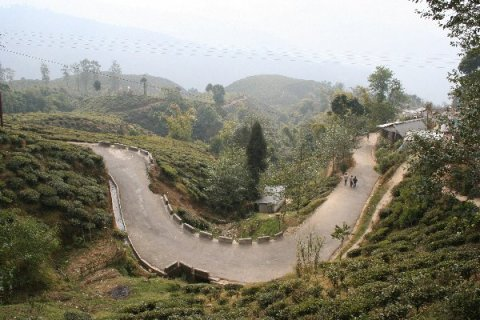 Дорога к плантации Happy Valley в Дарджилинге